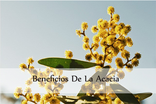 beneficios de la acacia