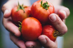 Beneficios cardiovasculares de los tomates