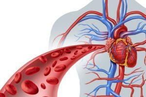 Qué es la hiperhomocisteinemia, conocer sus causas, síntomas, tratamiento, diagnóstico