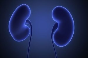 Cómo puedo hacer que mis riñones sean saludables