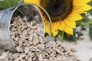 Beneficios para la salud de las semillas de girasol o Surajmukhi Ke Beej