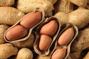Beneficios para la salud de comer maní hervido (maní o mungfali)