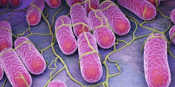 Cómo afecta la listeria al cuerpo