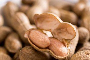 Cacahuetes hervidos vs Cacahuetes tostados secos cuál es mejor