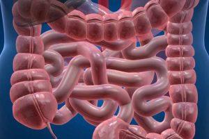 Salud intestinal y acné cómo se relaciona