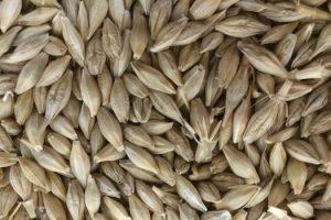 Sorprendentes beneficios para la salud de la cebada