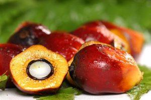 beneficios asombrosos del aceite de palmiste